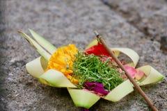 Schöne Blume im Garten Lizenzfreies Stockbild