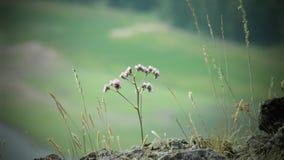 Schöne Blume im Makro lizenzfreie stockbilder