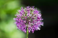 Schöne Blume im natürlichen Licht lizenzfreies stockfoto