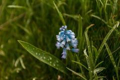 Schöne Blume im Sommergarten stockbilder