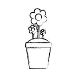 Schöne Blume im Topf Stockfoto
