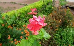 Schöne Blume mit Unschärfehintergrund Stockfoto