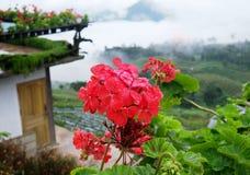 Schöne Blume mit Unschärfehintergrund Lizenzfreies Stockfoto