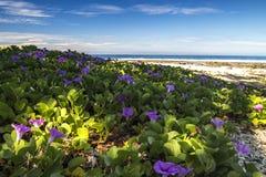 Schöne Blume am Strand Stockbilder