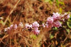 Schöne Blume und Anlage vibrierend lizenzfreie stockfotos