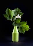 Schöne Blume und Grünblattnahaufnahme auf schwarzem Hintergrund Lizenzfreies Stockbild