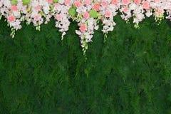 Schöne Blume und grüner Blatthintergrund lizenzfreie stockbilder