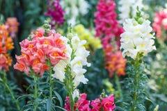 Schöne Blume und grüner Blatthintergrund im Garten Stockbild