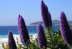 Schöne Blumen über Ozean Stockfotos