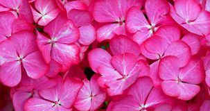 Schöne Blumen Lizenzfreie Stockbilder