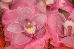 Schöne Blumen Lizenzfreies Stockbild