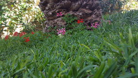 Schöne Blumen Stockfoto