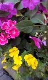 Schöne Blumen stockfotos