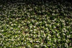 Schöne Blumen als Hintergrund lizenzfreie stockbilder