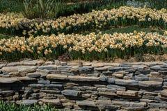 Schöne Blumen als Hintergrund lizenzfreies stockfoto