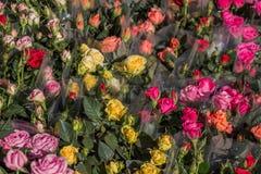 Schöne Blumen als Hintergrund lizenzfreies stockbild
