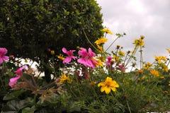 Schöne Blumen auf Bäumen Stockbild