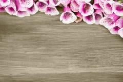 Schöne Blumen auf einem hölzernen Hintergrund Stockbilder