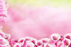 Schöne Blumen auf einem rosa Hintergrund Lizenzfreie Stockfotografie