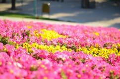 Schöne Blumen in China Stockbilder