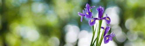 Schöne Blumen in der Gartennahaufnahme Stockbild