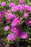 Schöne Blumen in der Natur stockbild