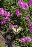 Schöne Blumen in der Natur lizenzfreie stockfotografie