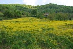 Schöne Blumen in der Türkei Stockbild