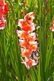 Schöne Blumen in der Wiese Stockfotos