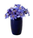 Schöne Blumen des Frühlinges Lizenzfreie Stockfotos