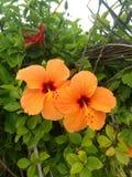 Schöne Blumen des indischen Dorfleben-Gartens stockfotos