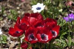 Schöne Blumen des selektiven Fokus im Garten Lizenzfreie Stockfotografie