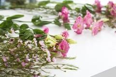 Schöne Blumen, die auf ihre perfekte Ergänzung warten Stockfotos