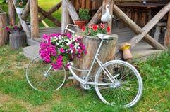 Schöne Blumen in einem Topf auf einem dekorativen Fahrrad stockfotos