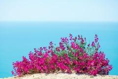 Schöne Blumen gegen das Meer Lizenzfreie Stockfotografie