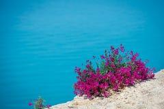 Schöne Blumen gegen das Meer Stockbild