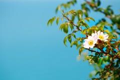 Schöne Blumen gegen das Meer Lizenzfreies Stockfoto