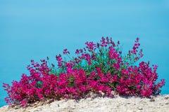Schöne Blumen gegen das Meer Stockfoto