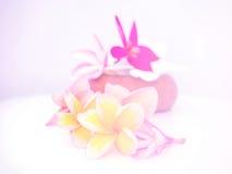 Schöne Blumen gemacht mit bunten Filtern Lizenzfreie Stockbilder