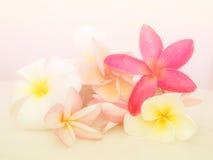 Schöne Blumen gemacht mit bunten Filtern Stockbild