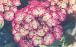 Schöne Blumen gemacht mit Farbfiltern Lizenzfreies Stockfoto