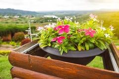 Schöne Blumen im Blumentopf Stockfotos