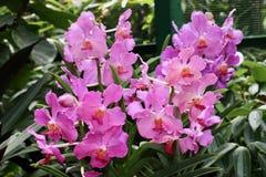 Schöne Blumen im Garten Stockbild