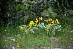 Schöne Blumen im Gras Lizenzfreies Stockfoto