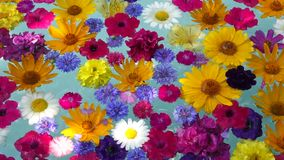 Schöne Blumen im Wasser stock footage