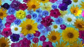 Schöne Blumen im Wasser stock video