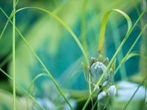 Schöne Blumen-Knospe mit undeutlichem Hintergrund lizenzfreie stockfotos