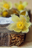 Schöne Blumen 8. März Karte der Frauen Tages Blumenstraußschneeglöckchen auf hölzernem Hintergrund Stockfoto