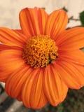 Schöne Blumen meines Gartens Stockfoto