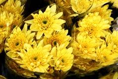 Schöne Blumen mit buntem lizenzfreie stockfotos